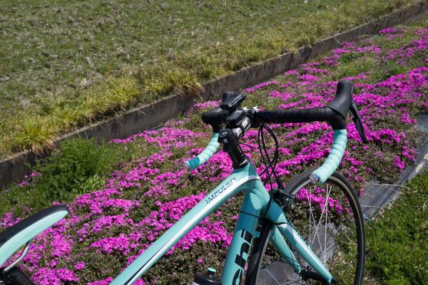 2週間ぶりにロードバイクでお出かけし、花々と景色に癒やされてきた