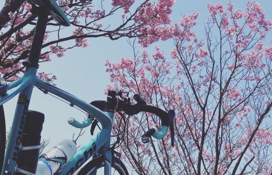 sakura-bianchi